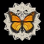 mariposa del alma peque